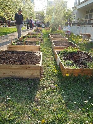 komunitní zahrady ve městech