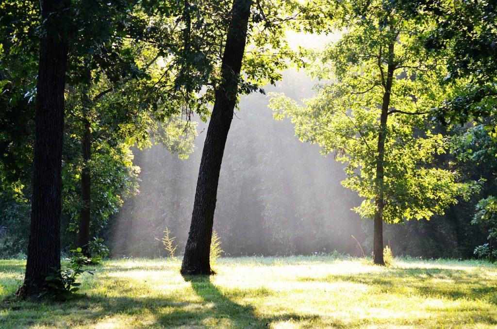 štěstí v lese