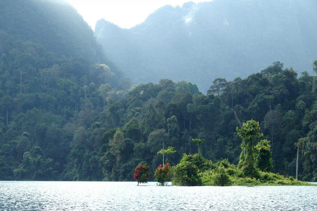 prales Khao Sok Thajsko