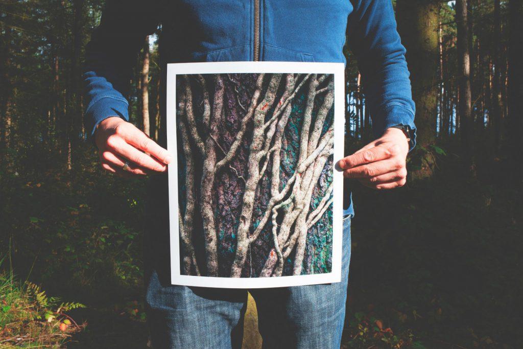 propojenost stromu v lese