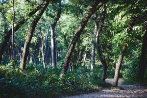 přirozený trénink, přirozený pohyb, přirozený běh