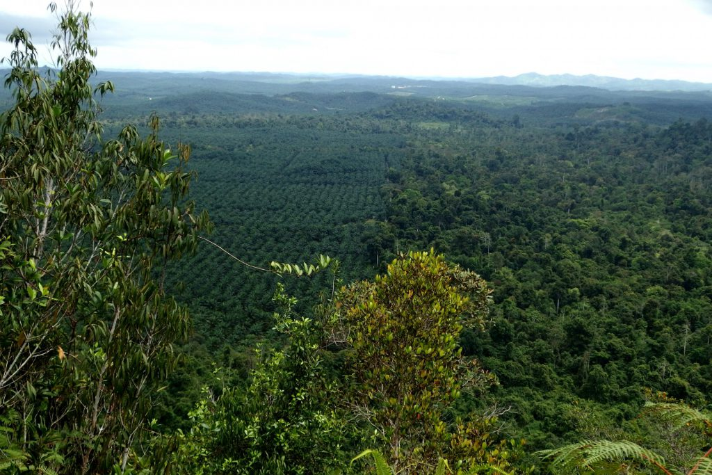 Sabah, Borneo, Malajsie