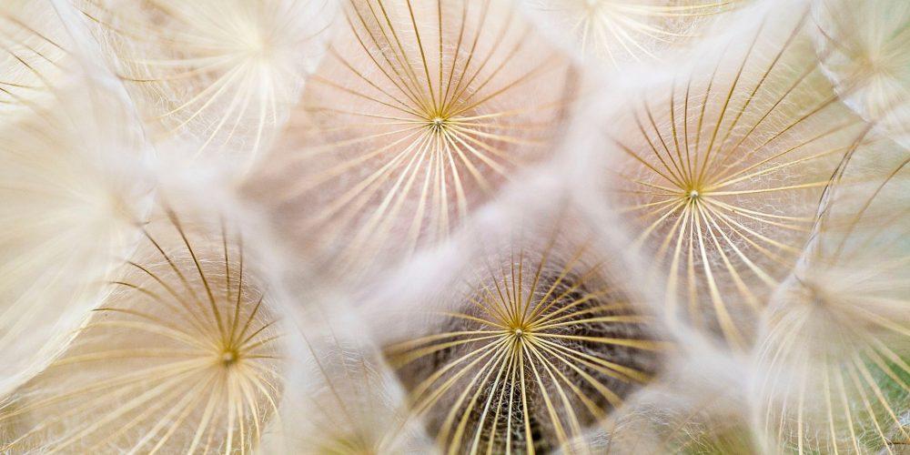 5 tipů, jak se popasovat s alergií s pomocí ajurvédy