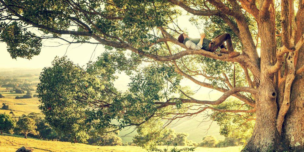 Objevili skrytou krásu propojenosti lesa. A navždy změnili způsob, jakým vnímáme stromy