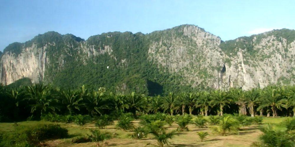 Viděl jsem, jak palmový olej ničí deštné lesy Jihovýchodní Asie. Co s tím můžeme udělat u nás doma?