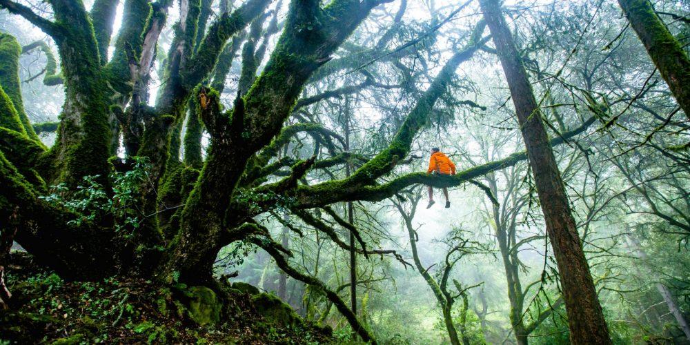 Telo je naša najbližšia príroda: ako cez vlastné telo apohyb zažiť prepojenosť so Zemou?